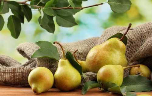 Селёдка: калорийность, польза и вред, кому её