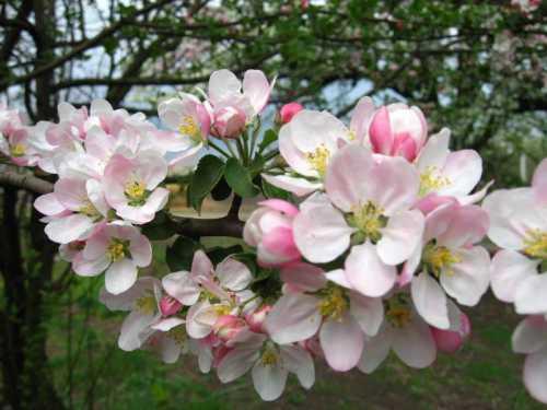 Садовые работы в мае
