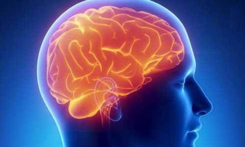 Ученые обнаружили в мозге  выключатель аппетита