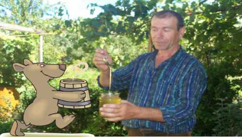 Как выбрать хороший мед