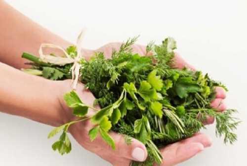 Лекарственные травы против лишних килограммов